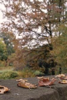 Conceito de solidão - foco seletivo de outono folha de plátano
