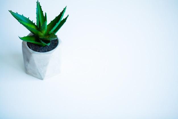 Conceito de spa. planta de aloe vera na mesa do banheiro.
