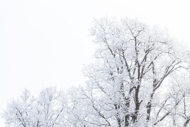 Conceito de temporada e natureza - galhos de árvores na neve.