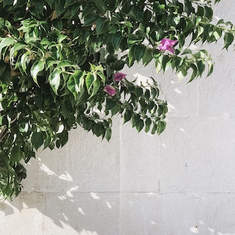 Conceito de vegetação mínima. linda planta verde exótica contra uma parede branca