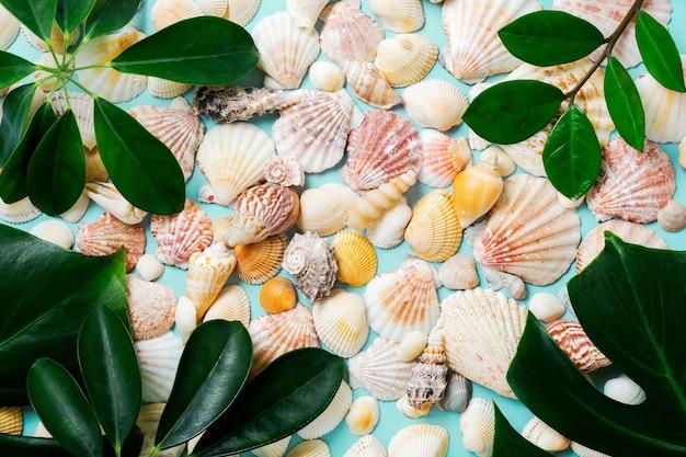 Conceito de verão com conchas do mar, estrelas do mar e folhas de monstera tropical em um fundo azul.