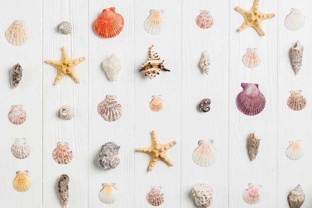 Conceito de verão com conchas