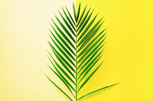 Conceito de verão com estilo. folhas de palmeira tropical no fundo amarelo e azul. natureza mínima.
