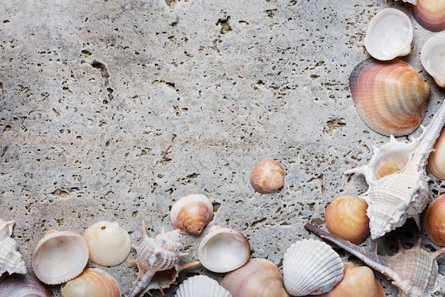 Conceito de verão. conchas do mar sobre o fundo de mármore claro. vista de cima para baixo com espaço para texto
