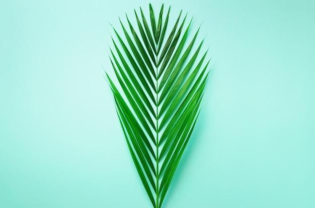 Conceito de verão mínima. folha do verde da vista superior no papel pastel perfumado. folhas de palmeira tropical no fundo azul.