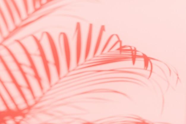 Conceito de viagens de verão. sombra de folhas de palmeira exóticas