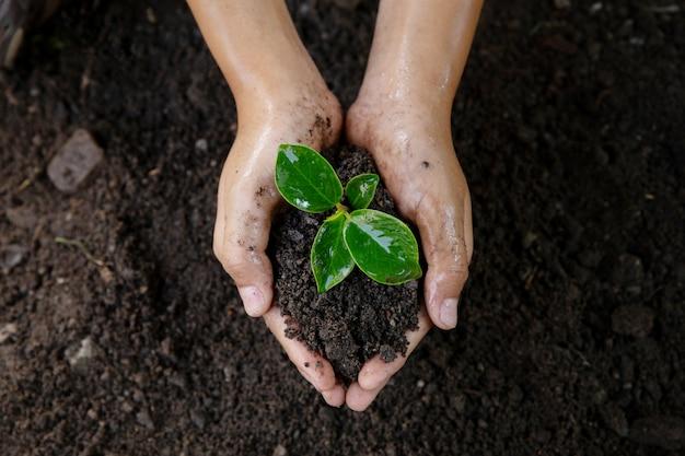 Conceito do dia da terra. pequena plântula em solo preto na mão de criança. dia do meio ambiente do mundo