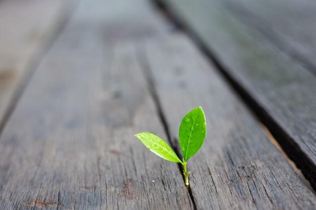 Conceito financeiro do negócio novo da ecologia do crescimento da vida.
