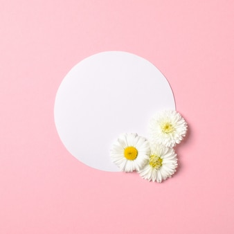 Conceito mínimo de natureza primavera. margarida flores e cartão de papel em forma de círculo branco sobre fundo rosa pastel. composição plana leiga com espaço de cópia.