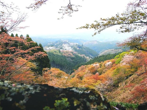 Conceito tranquilo da viagem ambiental da montanha da escala