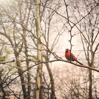 Conceito tweeting tranquilo da natureza do ramo do pássaro
