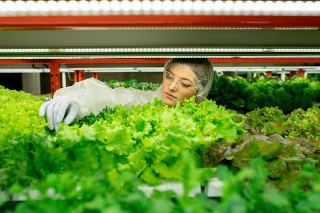 Concentrada jovem trabalhadora de fábrica com óculos de proteção e luvas de látex tocando as folhas enquanto controla a qualidade dos verdes