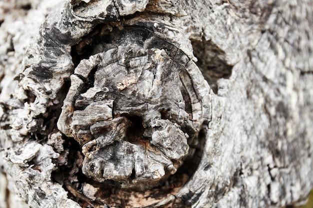 Concentre-se no centro de textura de tronco de madeira de casca de árvore Foto Premium