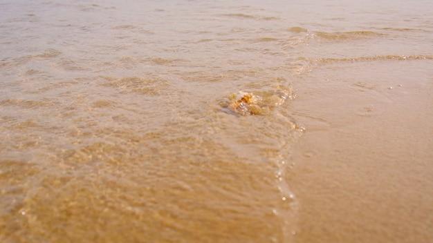 Concha à beira-mar na areia