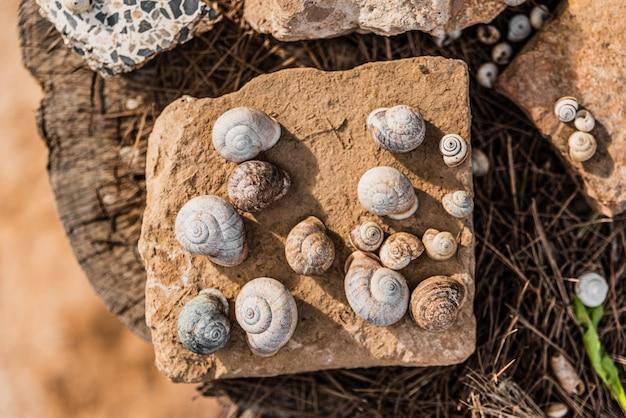 Concha de caracóis terrestres vazios coletados para uso como decoração em rochas e madeira em um jardim.
