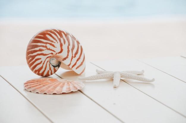 Concha de nautilus no fundo da piscina