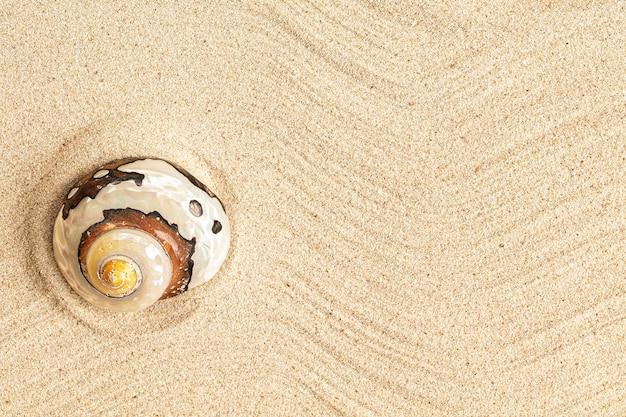 Concha do mar em espiral única na areia