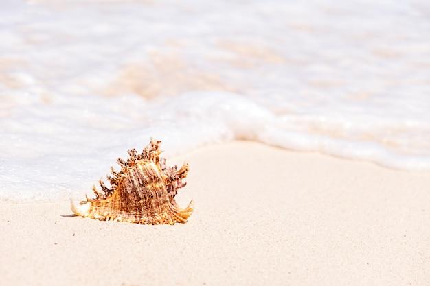 Concha do mar marrom na praia Foto Premium