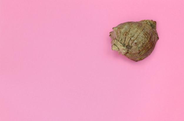Concha do mar mentir sobre fundo de textura de papel de cor-de-rosa pastel moda no conceito mínimo