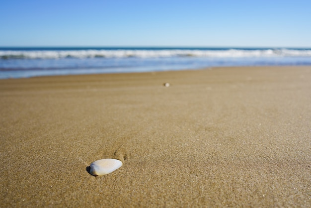 Concha do mar na areia da praia. dia ensolarado. praia tropical. profundidade superficial de campo.