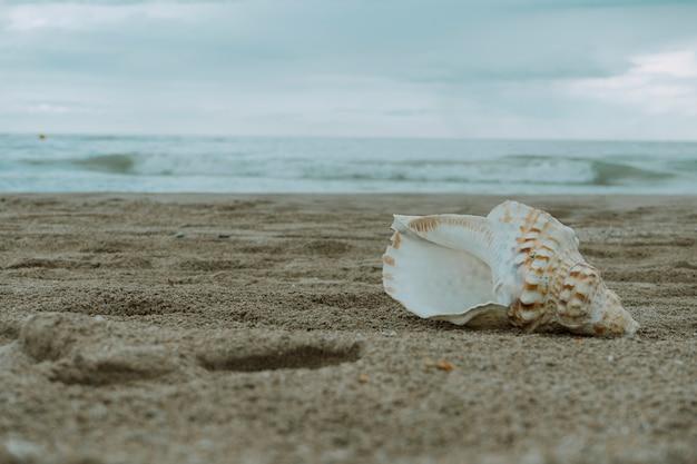 Concha do mar na areia da praia