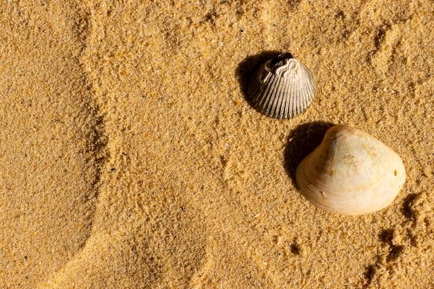Concha do mar na areia. fundo de verão de areia de vista superior.