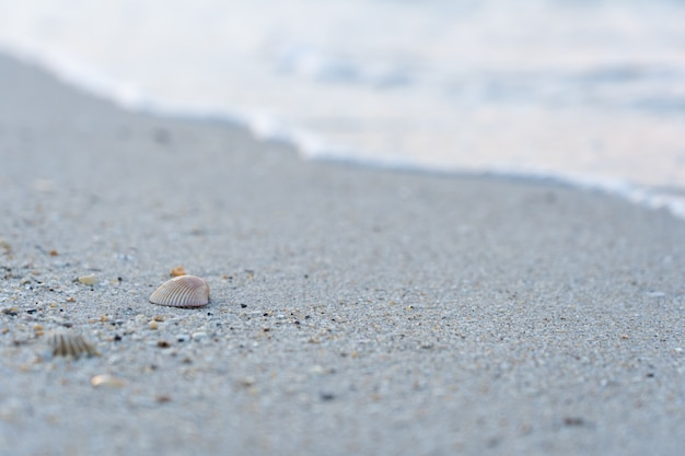 Concha do mar na areia