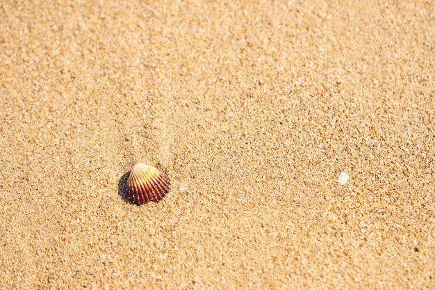 Concha do mar na praia de areia