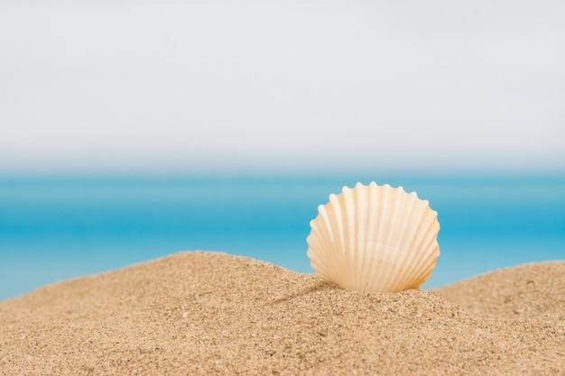Concha do mar na praia