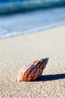 Concha do nautilus na areia da praia de carabineiros