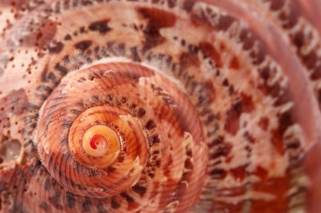 Concha em espiral do mar em um fundo claro para o texto um da série