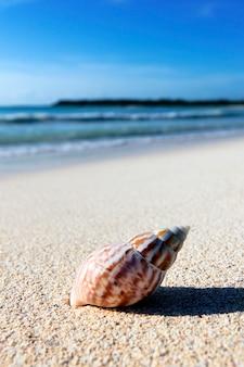 Concha na areia da praia, contra as ondas do mar