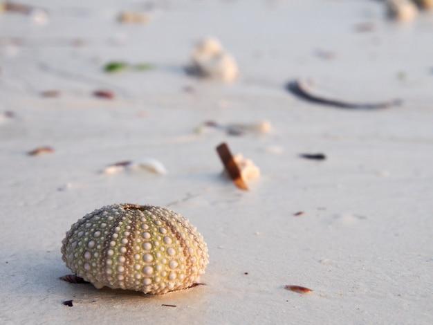 Concha na areia da praia