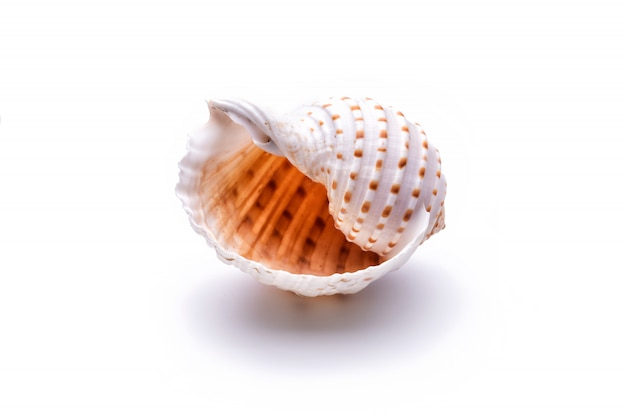 Concha natural do mar