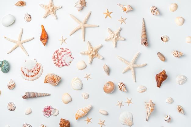 Conchas, amêijoas, estrelas do mar de diferentes formas e cores em um fundo branco. vista superior, horizontal.