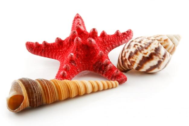 Conchas coloridas (estrela do mar e vieiras) isoladas no fundo branco