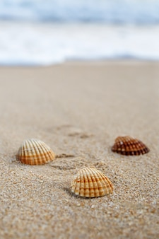 Conchas com nervuras na praia de areia, moldura vertical
