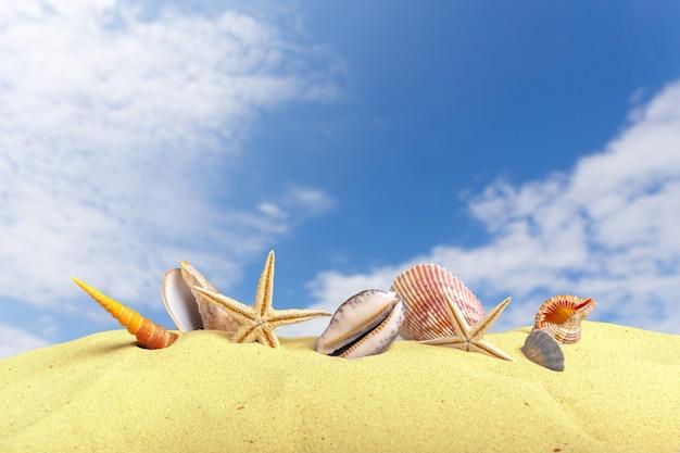 Conchas de estrela do mar na praia