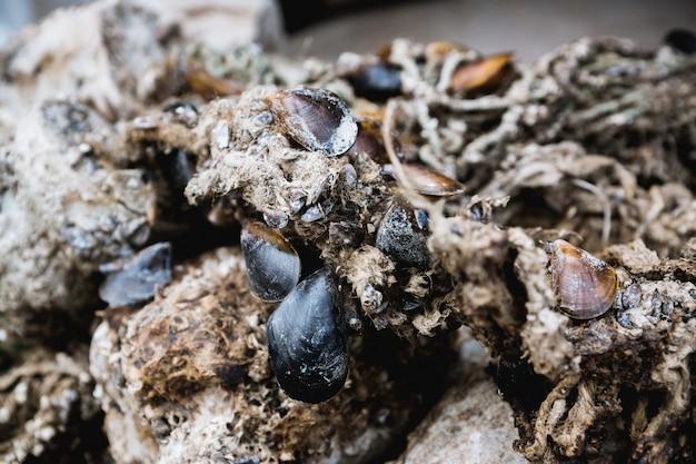 Conchas de molusco mexilhão enredadas em redes de pesca