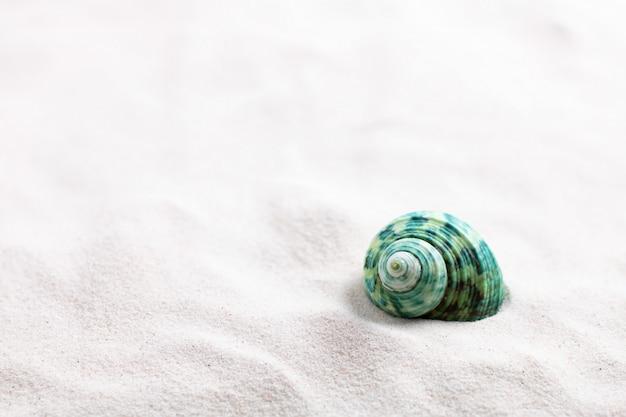 Conchas de molusco ou conchas na bela praia de areia branca Foto Premium