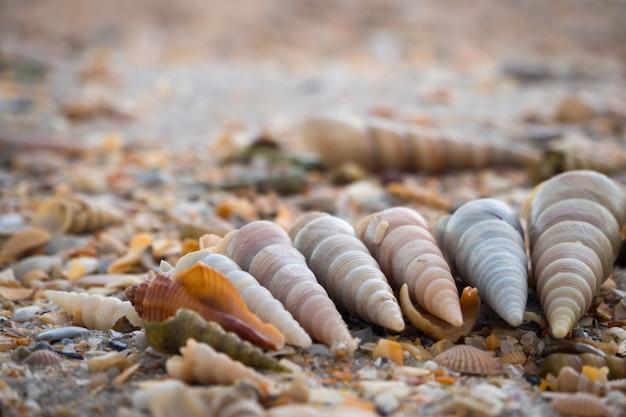 Conchas dispostas na areia.