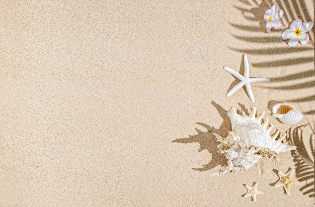 Conchas do mar branco e peixes-estrela na areia e sombras de palmeiras. fundo tropical, copie o espaço