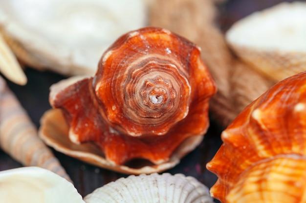 Conchas do mar. close-up da natureza.