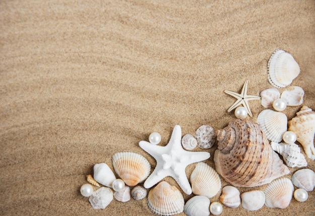 Conchas do mar com areia como pano de fundo