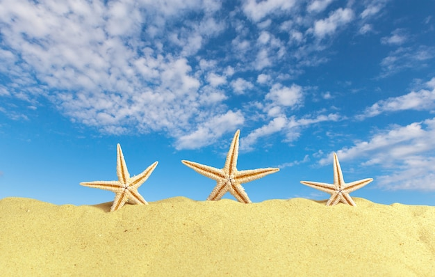 Conchas do mar com areia. praia de verão