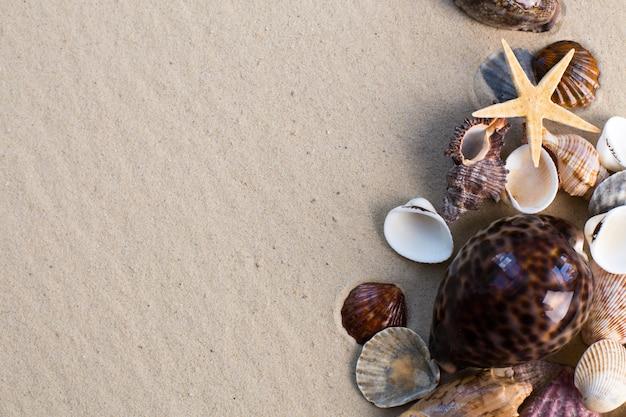 Conchas do mar com areia