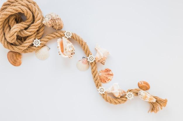 Conchas do mar com corda náutica na mesa