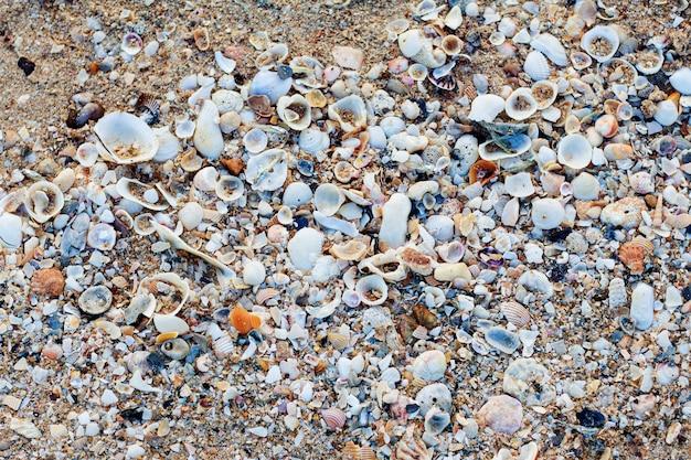 Conchas do mar com o fundo.
