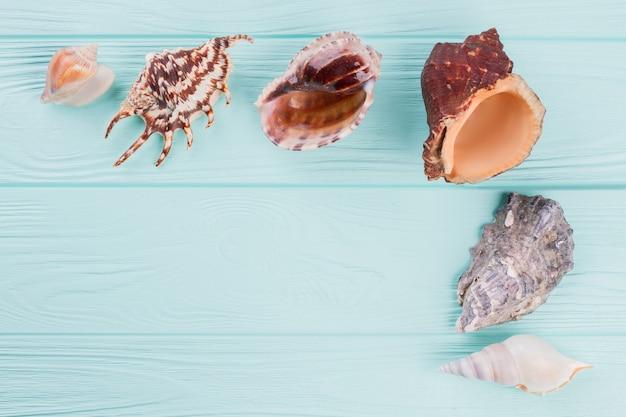 Conchas do mar de diferentes formas em um fundo turquesa