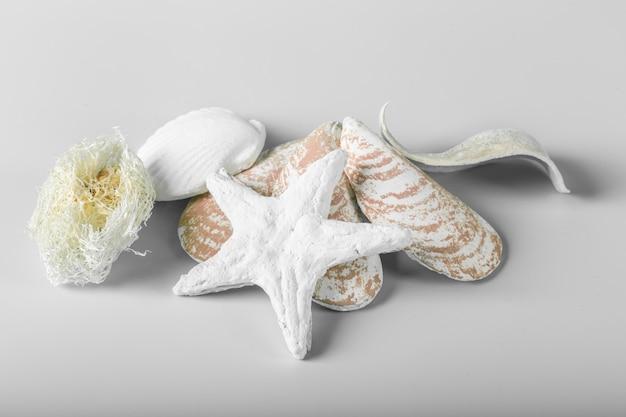 Conchas do mar decoracional isoladas sobre o branco